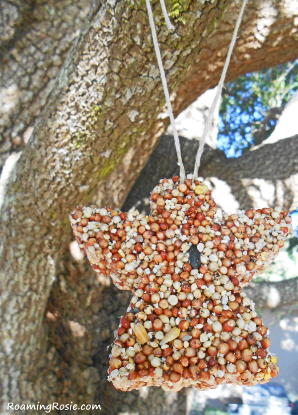 Birdseed Christmas Ornaments